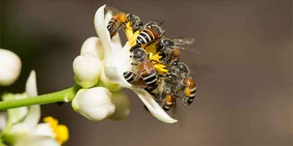 Bee collecting pollen from a flower the same way eDiscovery practitioners collect ESI.