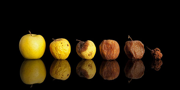 ESI spoliation sanctions progresses like the rotting of these yellow apples.